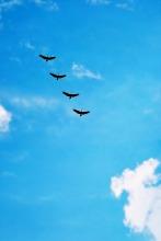 birds-216826_1280