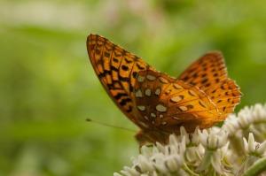 butterfly-424935_1280