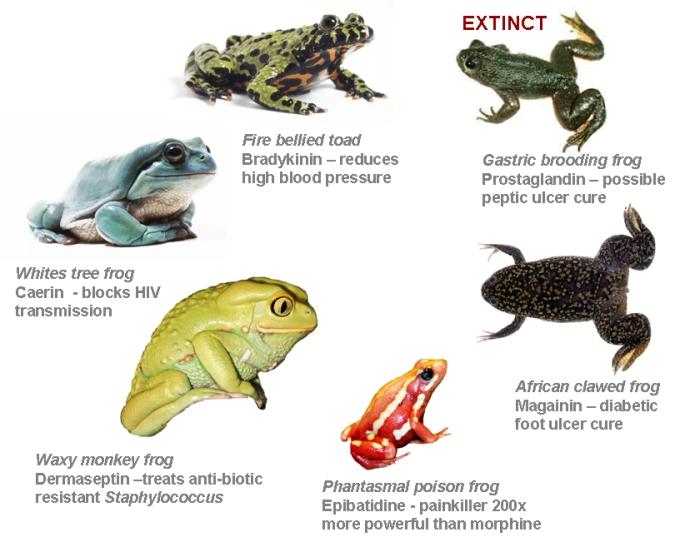 whyfrogs-matter