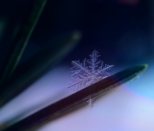 snowflake-1893777_1280