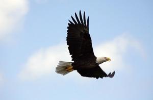 Soaring eagle-3854784_1280