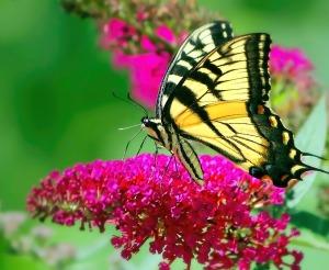 butterfly-2355361_1280
