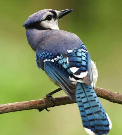 bird-386725_1280