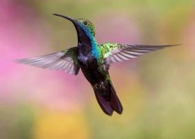 hummingbird-1854225_1280